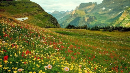 Beautiful nature - country, meadows, valleys, pretty, hills, rural, creation, beautiful, mountains, wild, flowers, nature