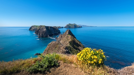 Giant Coreopsis on Anacapa Island - ocean, horizons, channel, island, sea, rocks, giant, view, beautiful, National park, California, wildflowers