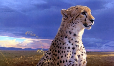 beautiful cheetah - feline, cheetah, eyes, expression