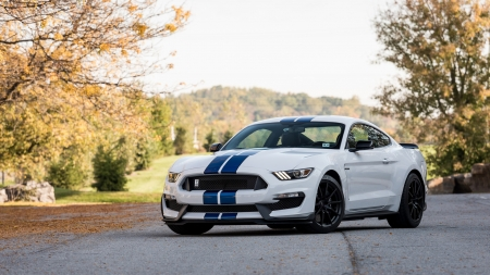 Ford Shelby GT350 - ford, cars, white cars, vehicles, Ford Shelby GT350, shelby