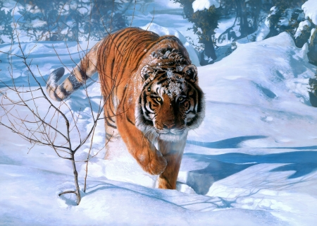 Tiger - art, frumusete, painting, tigru, tiger, pictura, winter, iarna
