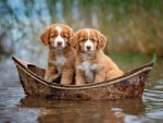 Two in a boat