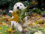 Autumn Dog And Large Leaf
