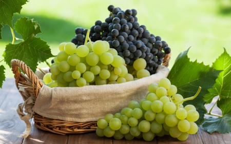 Grapes - toamna, fruit, grape, autumn, struguri