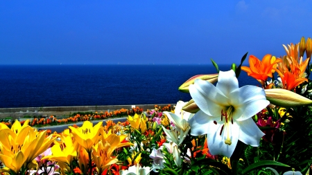 Seaside floral Rainbow - beauty, flowers, nature, wall, sky, sea, field, colorful, boats, road