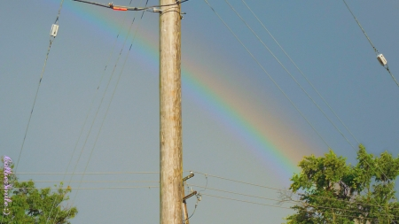 The Other Side of the Rainbow - skies, rainbows, natura1, co1orful, rainbow, trees, utility pole, wires