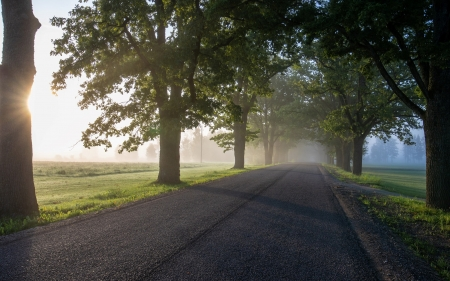 Road in Latvia - alley, trees, road, avenue, Latvia, mist