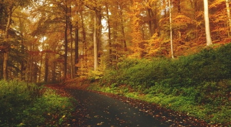 Transition - nature, seasons, landscape, scene, wood, forest, fall, autumn, wallpaper, path, road