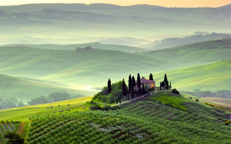 Tuscan Morning - trees, italy, hills, house, vineyard, cypresses, mist