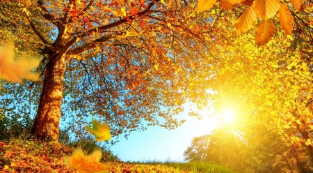Autumn landscape - abstract, landscape, scene, field, fall, sun, autumn, sunlight, photography, tree, wallpaper