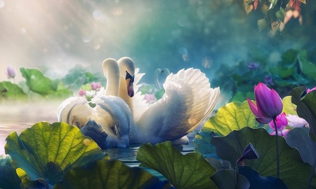 Swan Lake - softness, lake, gentleness, Lily pads, Swans, love, beauty