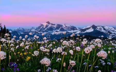 Snow Mountains Alpine Meadows in Washington - Flowers, Mountains, Snow, Pastel