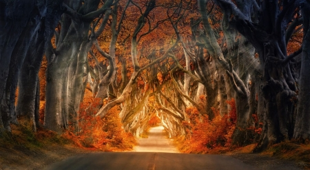 Gorgeous autumn rays - fall, forest, vivid, autumn, sunlight, trees, rays, wallpaper, colours, nature, road, wood, scene, landscape
