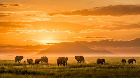 Elephant Herd at Sunset - Elephants, Landscape, Africa, Sky, Clouds, Nature, Sunsets, Animals