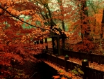 A Bridge to Autumn