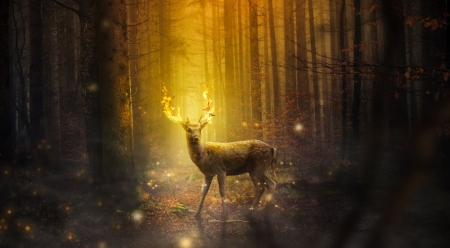 Deer season - photomanipulation, wild, wildlife, abstract, digital art, wild animals, animals, deer, fantasy, wallpaper
