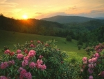 sunset over beautiful azaleas