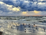 Sea and Gulls in Latvia