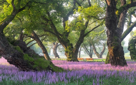 Old Trees And Flowers Other Nature Background Wallpapers On