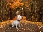 Sweetie in Autumn Forest