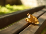 First autumn leaf