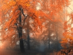 Amazing foggy forest