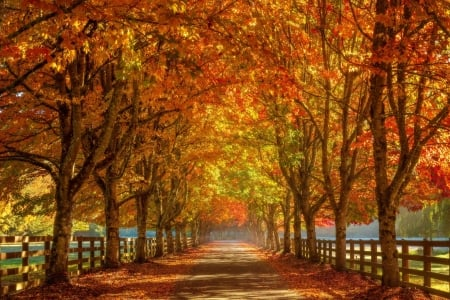 Vibrant Fall Colors Near Seattle - trees, alley, washington, fence, leaves, road
