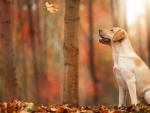 Cute fall dog
