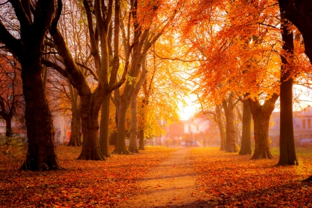 Colorful trees in park - romantic, path, beautiful, park, walk, trees, alley, colorful, fall, foliage