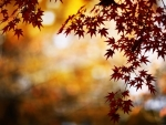Red foliage bokeh
