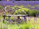 the bench in lavender field