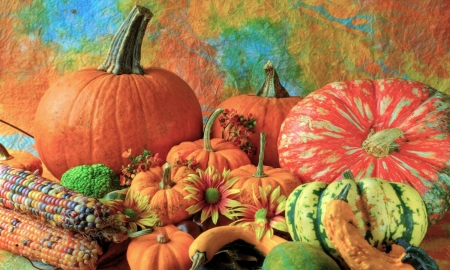 Pumpkins and Gourds - gourds, Pumpkins, colorful, autumn, orange, halloween, Photography