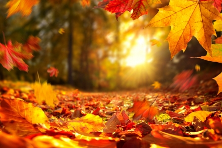 Fall Foliage Other Nature Background Wallpapers On