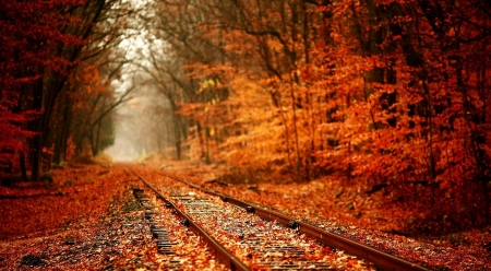Autumn railway - railroad, forest, fall, railway, autumn, nature, landscape, scene, wallpaper