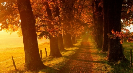 Autumn walk - landscape, scene, fall, foggy, autumn, fog, mist, wallpaper, path, misty, nature, way, road, field