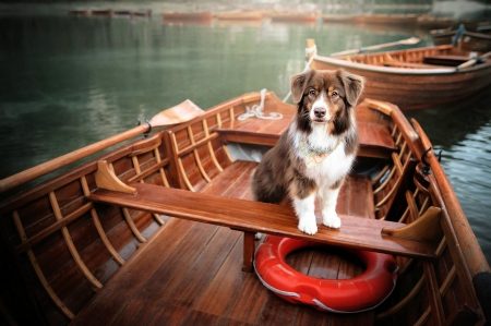 Boating - paddles, river, boat, dog, lifebelt