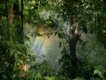 Rainbow in a Rainforest