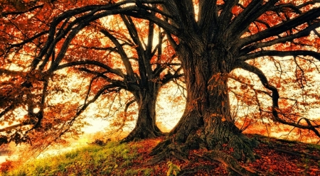 Beautiful Fall Trees Forests Nature Background