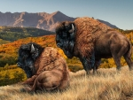Buffalos in Autumn