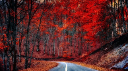 Red trees - forest, red, fall, autumn, fall trees, wallpaper, path, nature, way, colours, road, landscape, scene