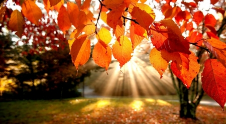 Autumn perspective - landscape, scene, fall, forest, autumn, sun, sunlight, park, leaf, leaves, wallpaper, nature
