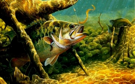 Large Mouth Bass Fish Animals Background Wallpapers On Desktop Nexus Image 2513471