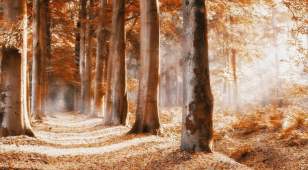 Follow the path - path, way, nature, landscape, scene, fall, forest, autumn, sunlight, trees, wallpaper