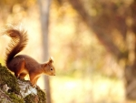 Squirrel in a golden afternoon