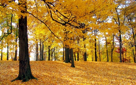 Golden Nature - pretty, forest, Fall, vivid, orange, golden, black, creation, trees, photography, beauty, bright, nature, season, Autumn, natural