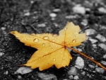 Raindrops on fallen leaf