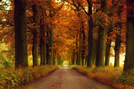 Autumn Road - colors, leaves, trees, alley, fall
