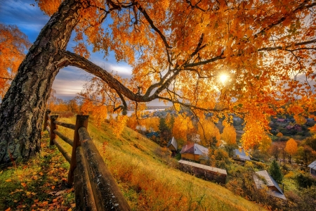 Autumn in countryside - tree, autumn, view, golden, village, branches, fence, fall, beautiful, countryside
