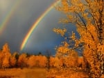 Autumn Rainbows