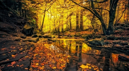 Autumn scene - autumn, nature, reflection, foliage, landscape, scene, stream, fall, forest, wallpaper